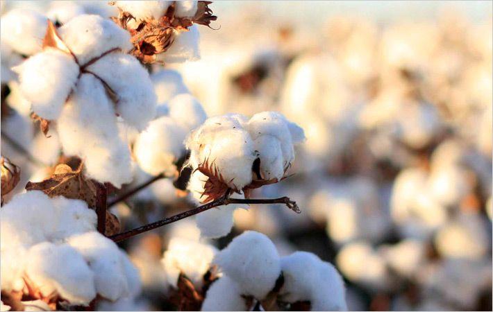越南的棉花消耗减缓
