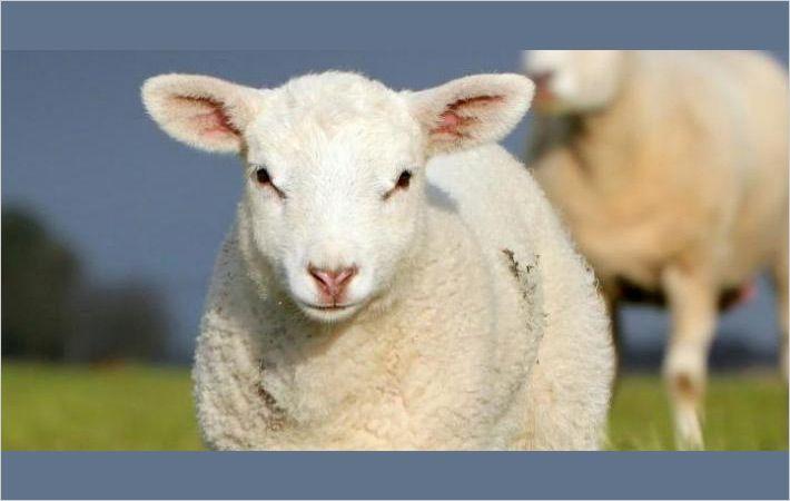 英国羊毛通过奖项促进新兴人才