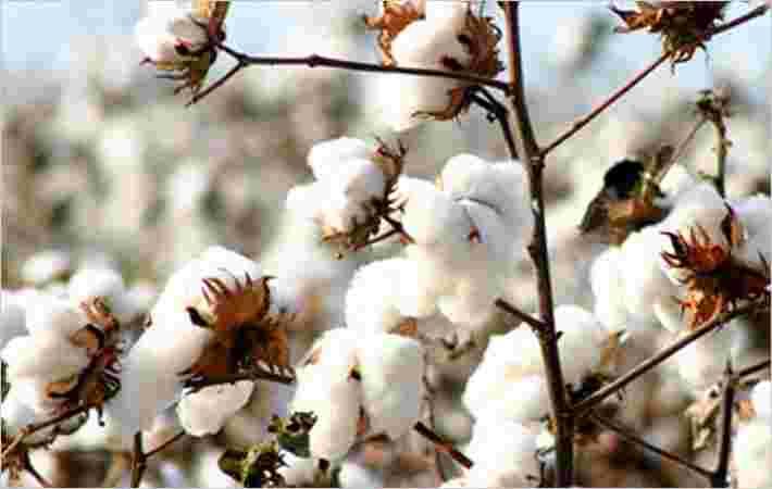 ICA在土耳其主持棉花培训车间