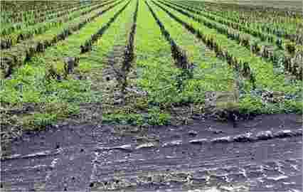 美国棉农发现低成本肥料