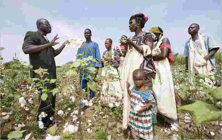 埃塞俄比亚农民成长CMIA可持续棉花