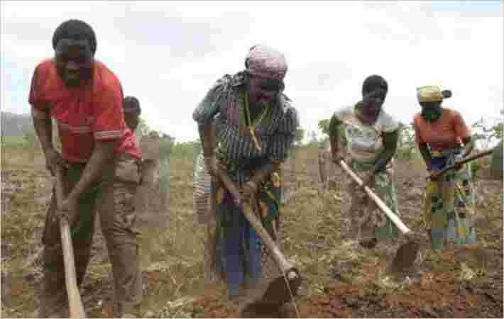 莫桑比克棉花从巴西技术获得提升
